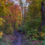 Autumn on the Oberg Mountain Hiking Trail Loop, Minnesota